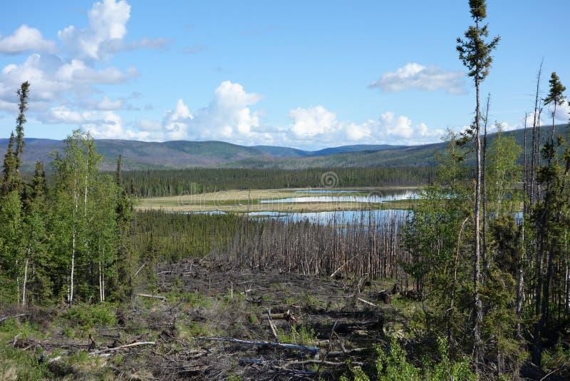Download Una Escena Hermosa En Alaska Imagen de archivo - Imagen de cepillo, río: 41913643
