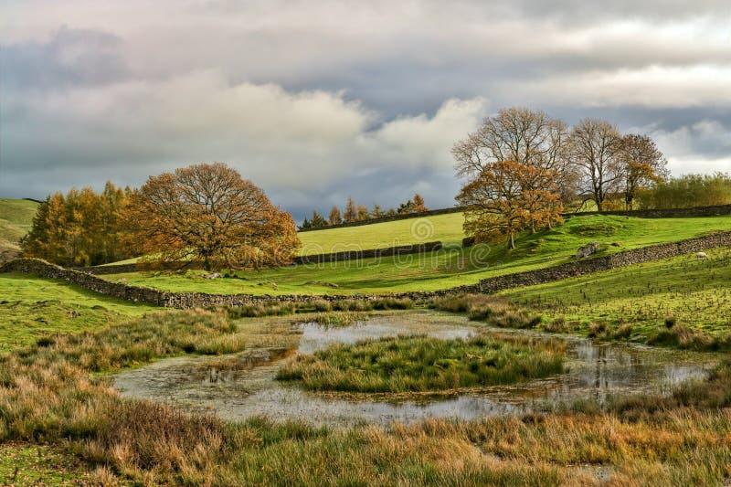 Una escena inglesa del otoño con un grupo de árboles por un Tarn o una charca fotos de archivo