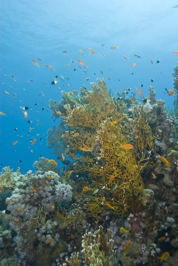 Una escena tropical colorida del filón coralino con el fuego c imagenes de archivo