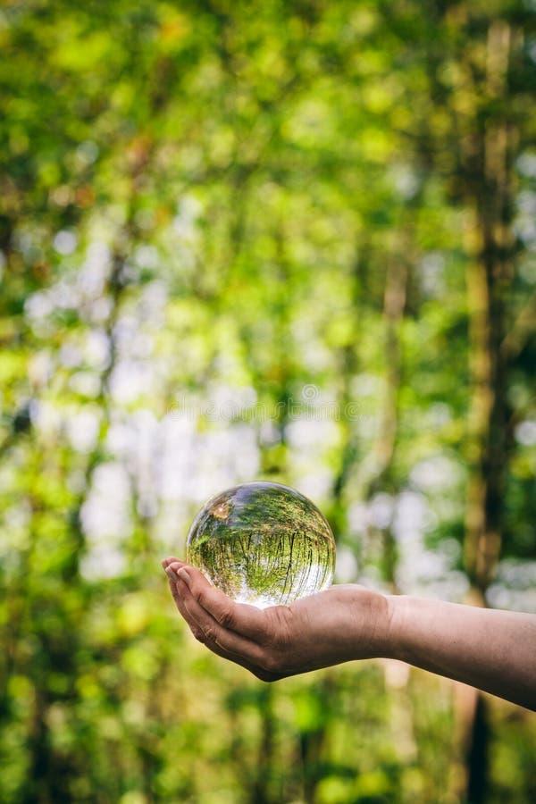 Una esfera de cristal se sostuvo por una mujer, reflejando un bosque imagen de archivo libre de regalías