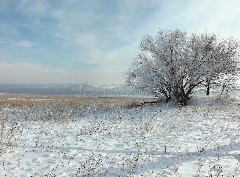 Una estepa nevada y un árbol solo cubiertos con escarcha fotos de archivo libres de regalías