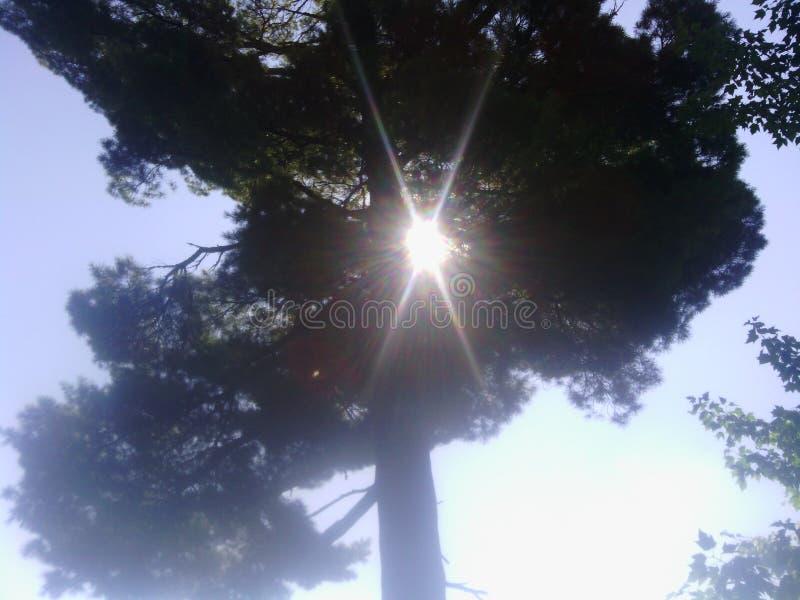 Una estrella entre los árboles imagenes de archivo