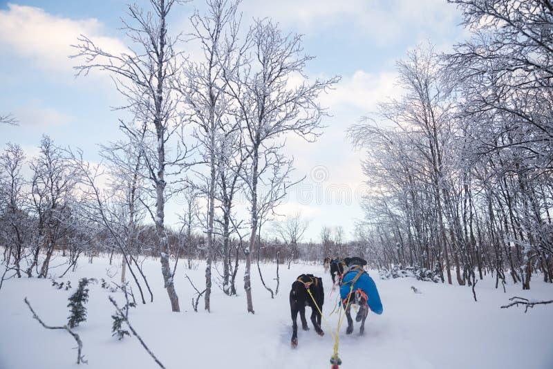 Una experiencia emocionante que monta un trineo del perro en el paisaje del invierno Bosque y montañas Nevado con un equipo del p fotos de archivo