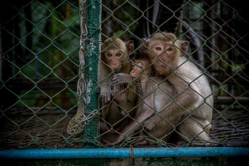 Una familia de monos imagenes de archivo