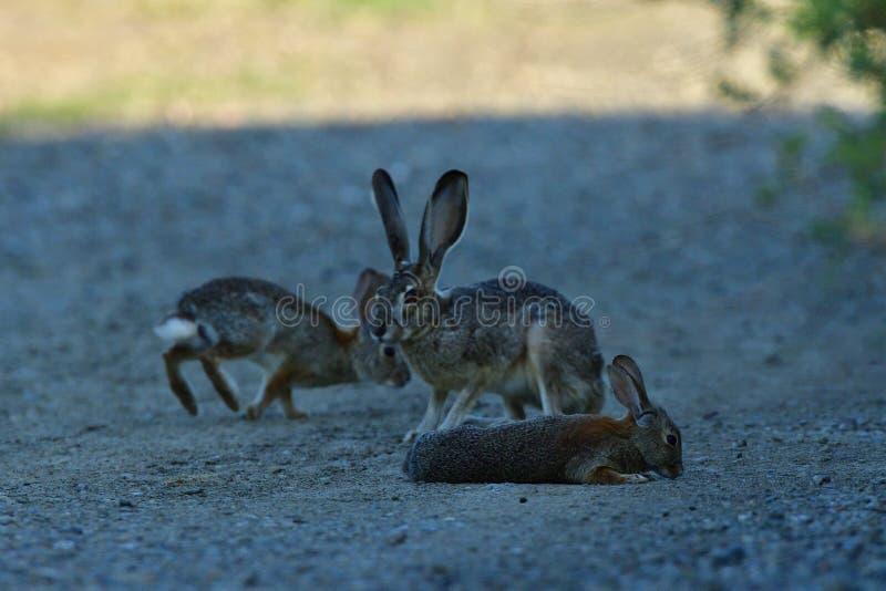 Una familia del conejo que tiene una reunión fotografía de archivo