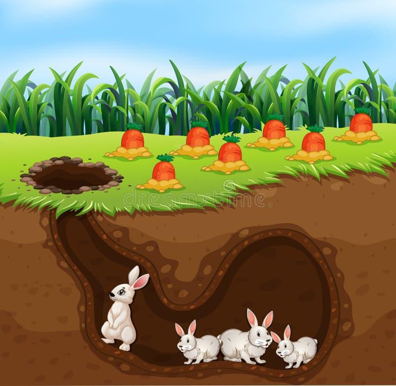 Una familia del conejo que vive en agujero stock de ilustración