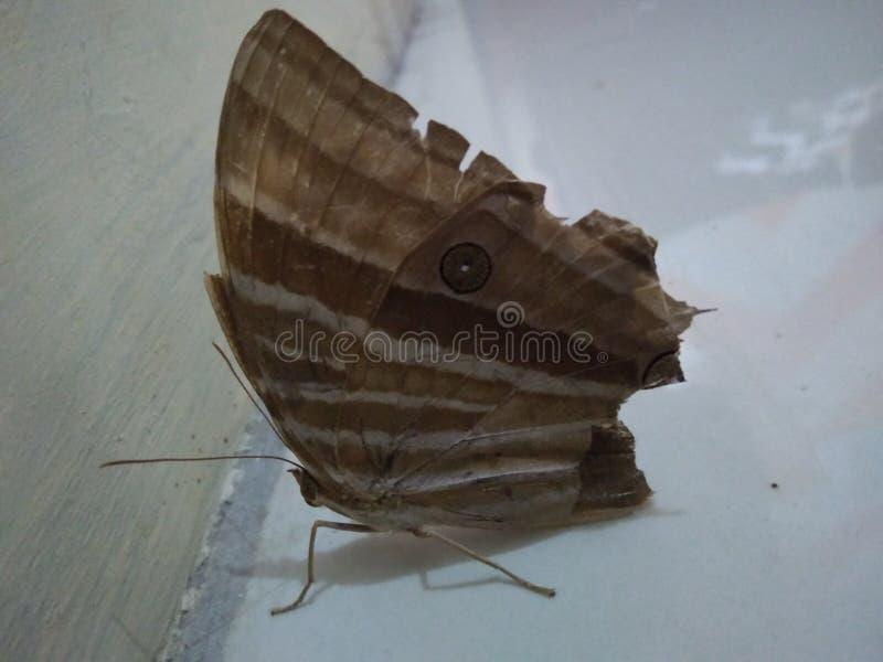 Una farfalla fotografia stock libera da diritti