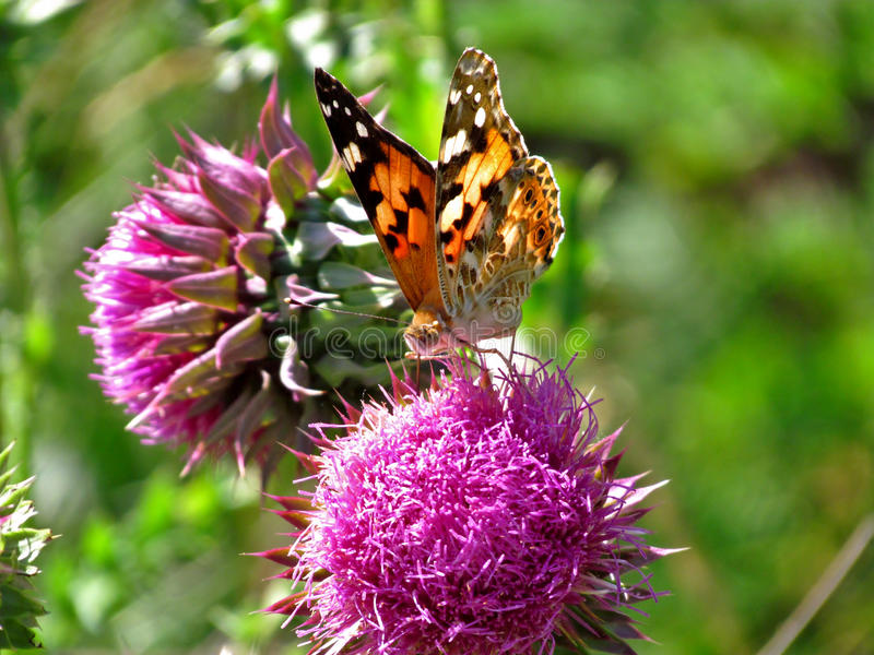 Una farfalla su un fiore fotografie stock