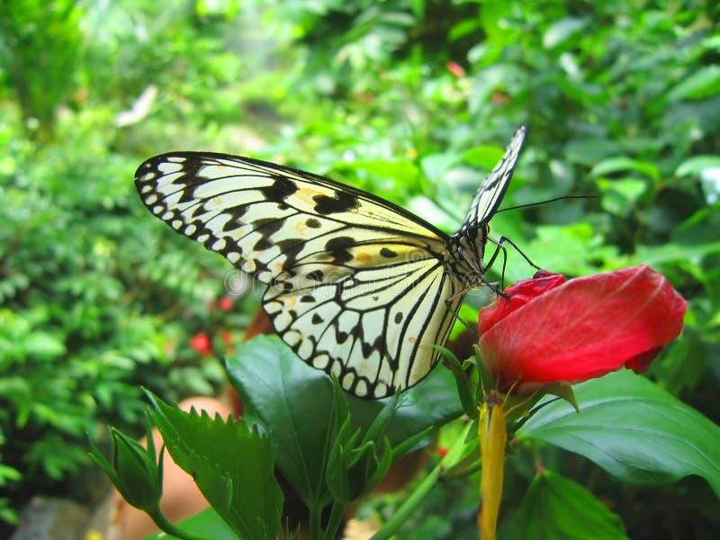 Una farfalla su un fiore rosso immagini stock libere da diritti