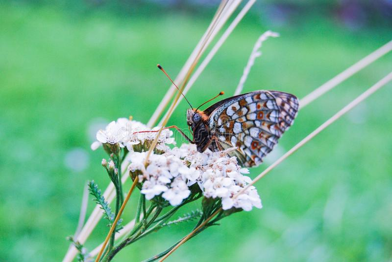 Una farfalla sui fiori fotografia stock
