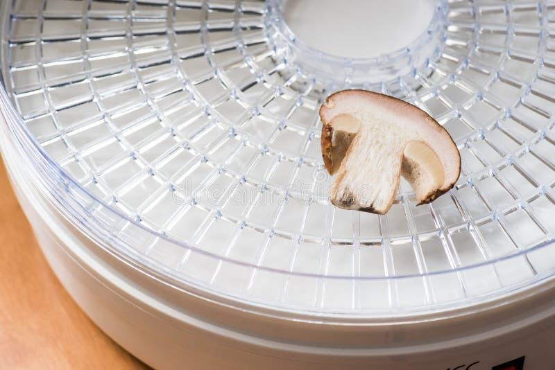 Una fetta di piccolo porcini in un disidratatore fotografie stock libere da diritti