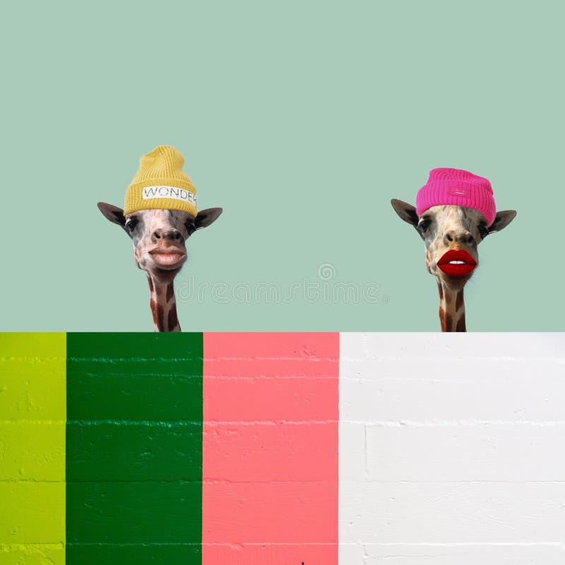 Una figura di due giraffe, arte dell'illustrazione illustrazione di stock