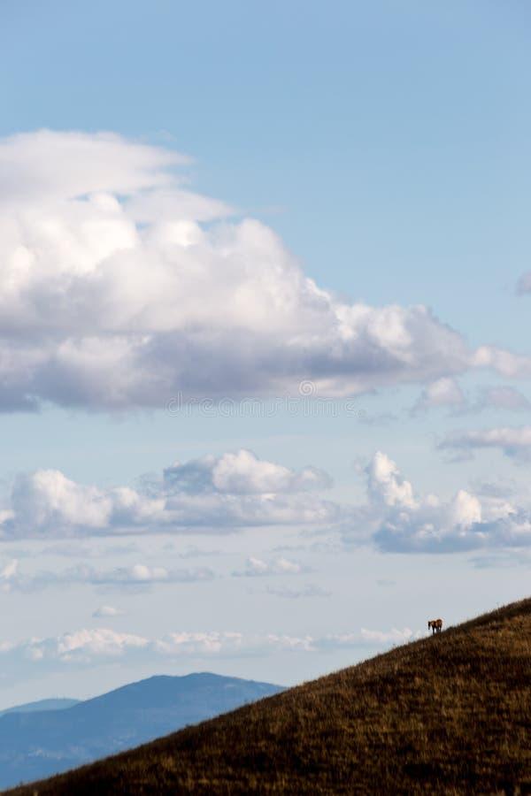 Una figura minuscola del cavallo dal lato di una montagna, sotto un bl profondo fotografia stock