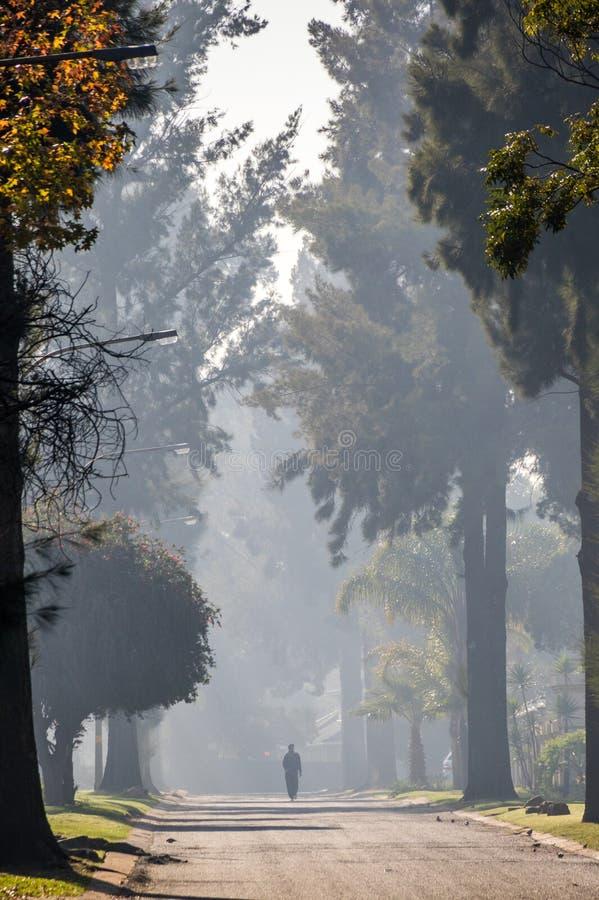 Una figura solitaria camina abajo de una calle alineada árbol imagenes de archivo