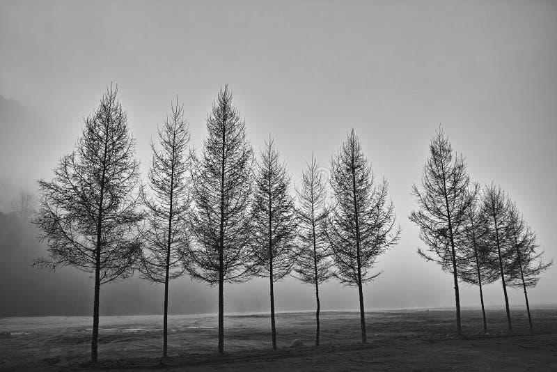 Una fila de árboles en blanco y negro foto de archivo