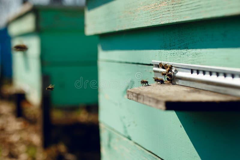 Una fila de las colmenas de la abeja en el jardín con tres en fondo Abejas de la miel en una granja de la abeja de la miel Tiro e fotografía de archivo
