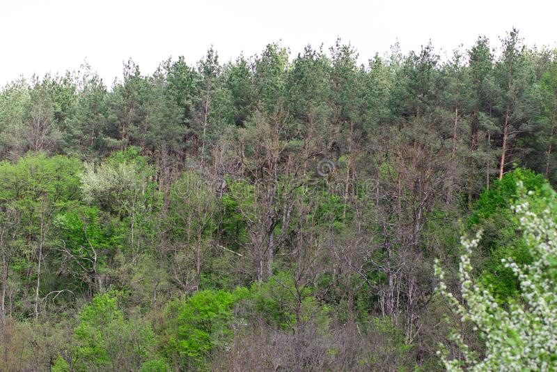 Una fila de ?rboles y de arbustos verdes contra un cielo azul imagenes de archivo