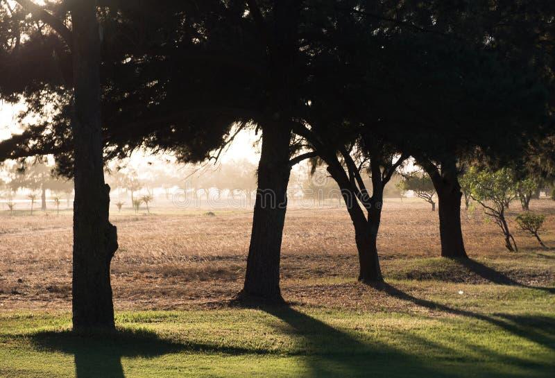 Una fila degli alberi appoggia acceso su un campo da golf immagine stock