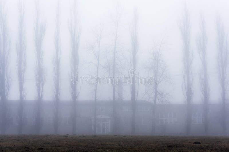 Una fila degli alberi esili alti su una fossa dello stagno in una nebbia spettrale immagine stock libera da diritti