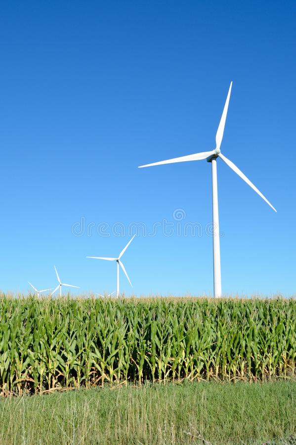 Una fila dei generatori eolici in un campo di mais immagine stock libera da diritti