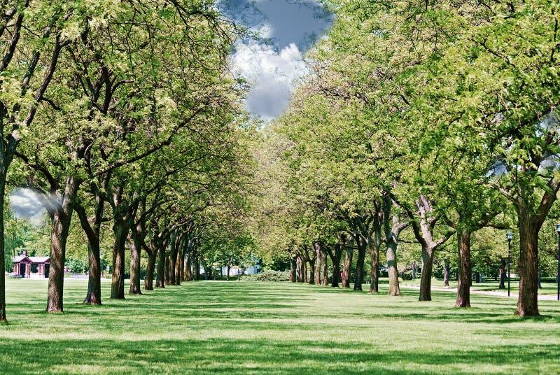 Una fila doble de árboles en un día de verano soleado en Cantigny en Wheaton, Illinois imagen de archivo libre de regalías