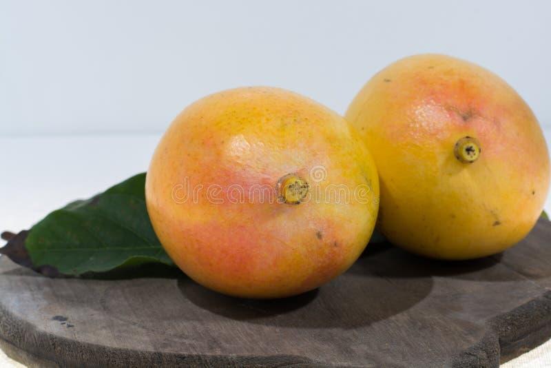 Una fine pronta da mangiare di due manghi gialli organici maturi su fotografie stock