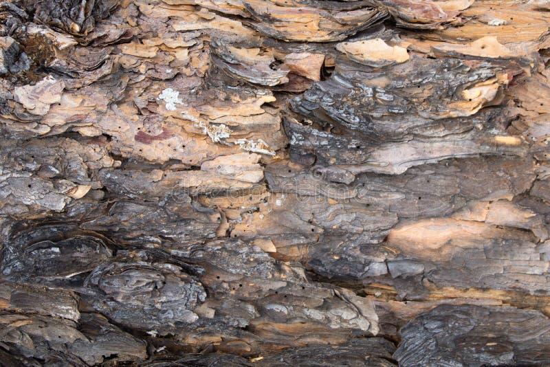 Una fine su della corteccia di legno su un albero fotografia stock libera da diritti