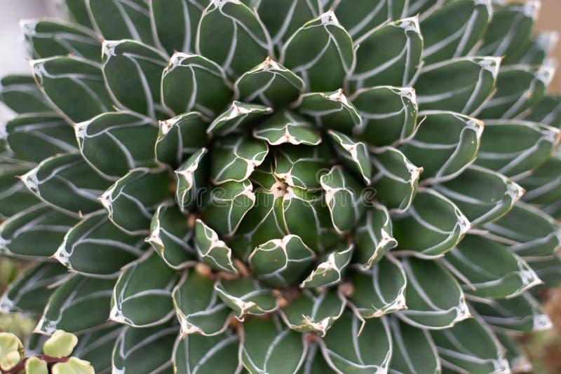 Una fine su di un cactus immagine stock libera da diritti