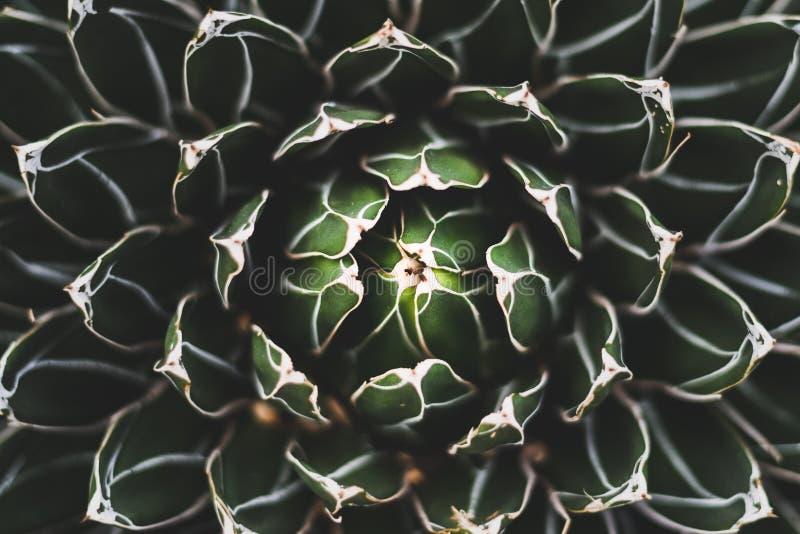 Una fine su di un cactus immagine stock