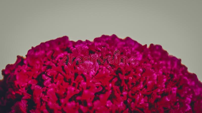 Una fine su fotografia del fiore rosso con il fondo della sfuocatura ad un parco immagini stock
