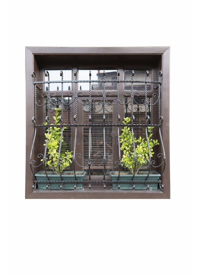 Una finestra di legno con la bella guardia del ferro ed il fiore verde nel fondo bianco isolato immagine stock libera da diritti
