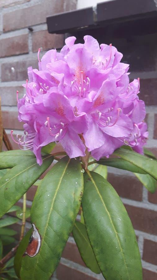 Una flor fotografía de archivo