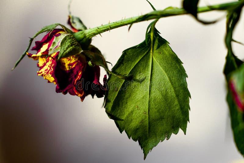Una flor imagen de archivo libre de regalías
