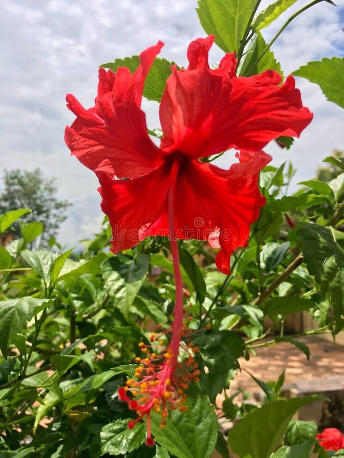 Una flor imágenes de archivo libres de regalías