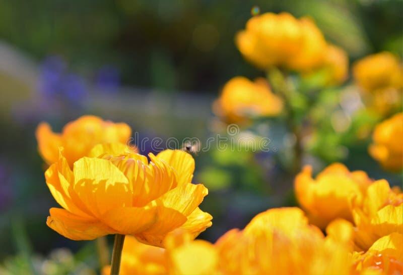 Una flor anaranjada grande con una pequeña mosca ilustración del vector