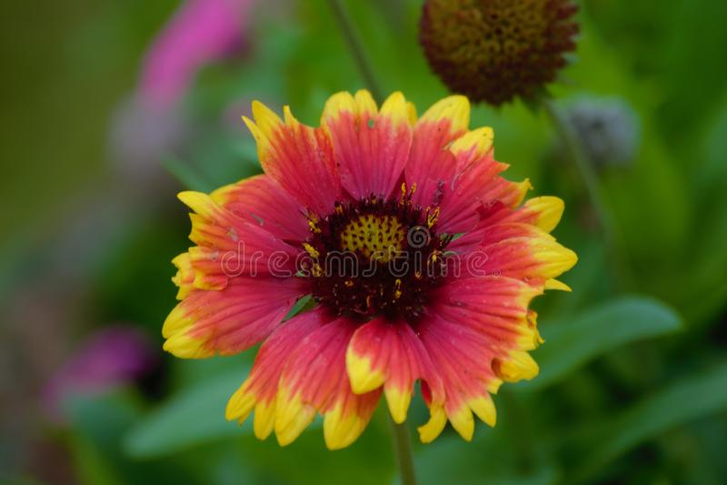 Una flor aseada en el bioma del bosque de la nube fotografía de archivo