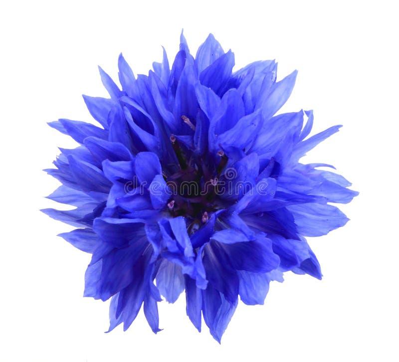 Una flor azul imagenes de archivo