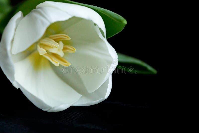 Dorable La Flor Del Arte De Uñas Imagen - Ideas de Pintar de Uñas ...