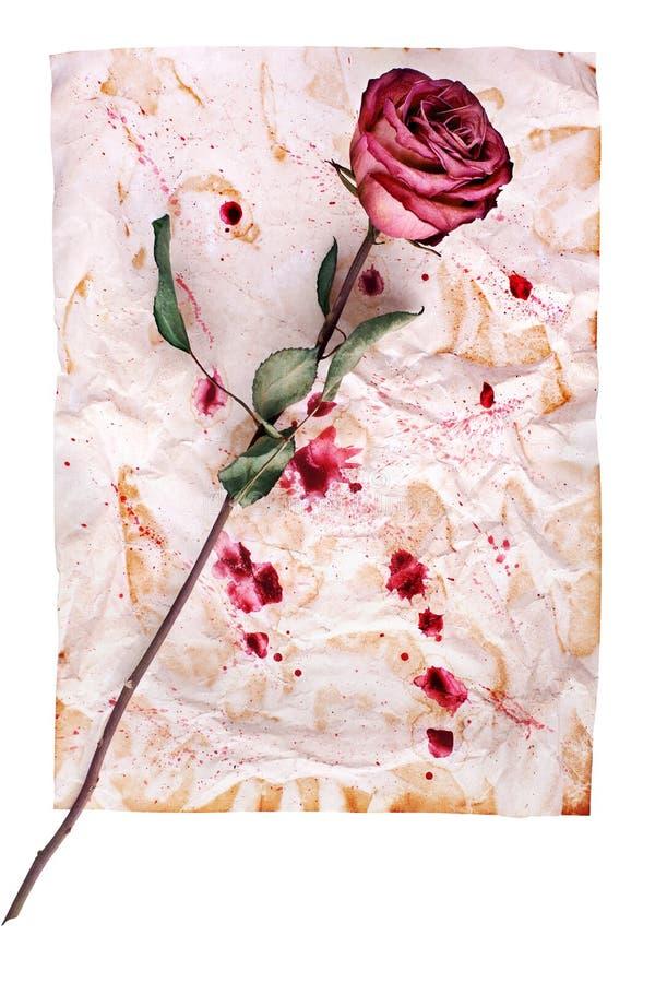 Una flor color de rosa roja en fondo de papel envejecido arrugado con la pintura borra cerca para arriba aislado en blanco fotos de archivo libres de regalías