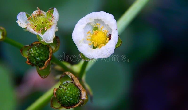 Una flor común fotografía de archivo