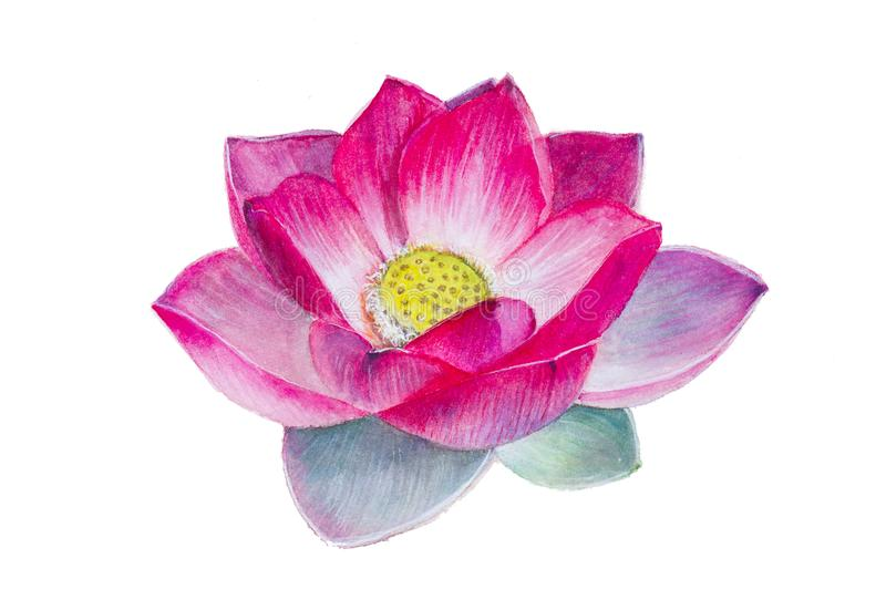 Una flor de loto Pintura de la acuarela realismo stock de ilustración