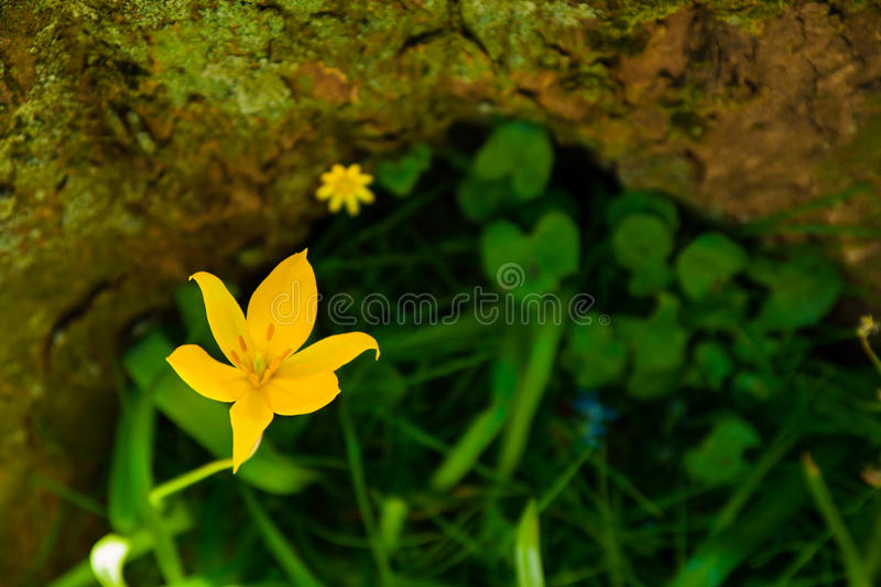 Una flor de mi color imagen de archivo