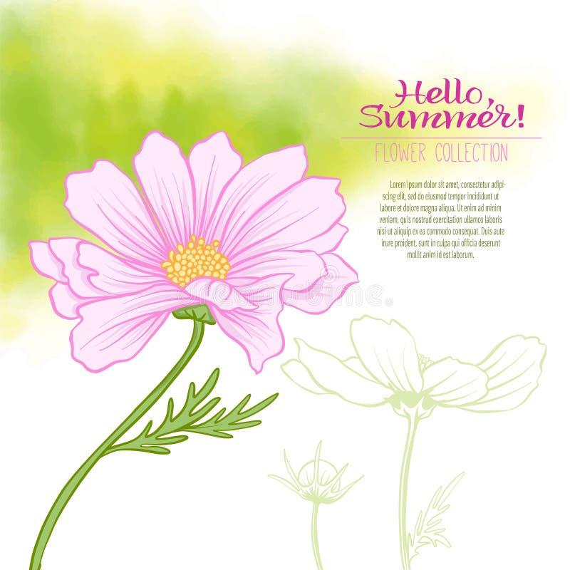 Una flor del cosmos en un fondo verde de la acuarela stock de ilustración