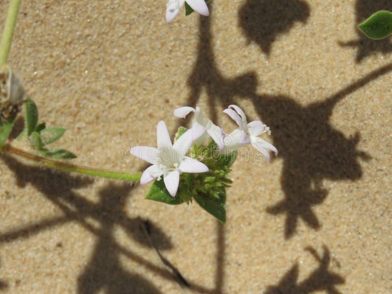 Una flor del hexagram en la arena imágenes de archivo libres de regalías