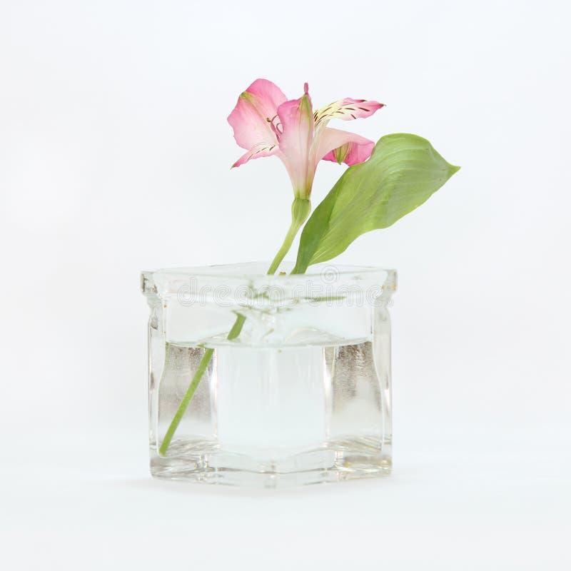 Una flor en un florero. fotografía de archivo libre de regalías