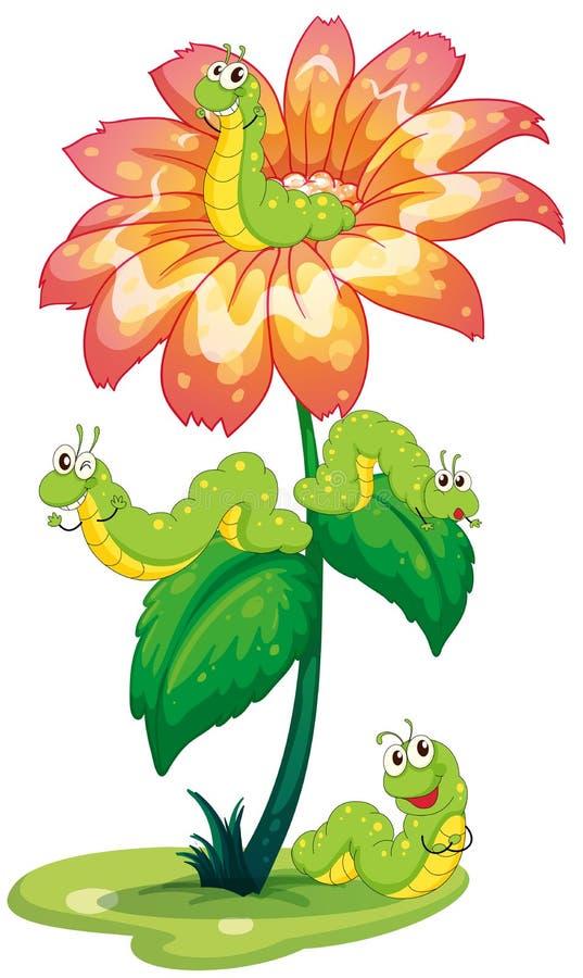Una flor grande con los gusanos stock de ilustración