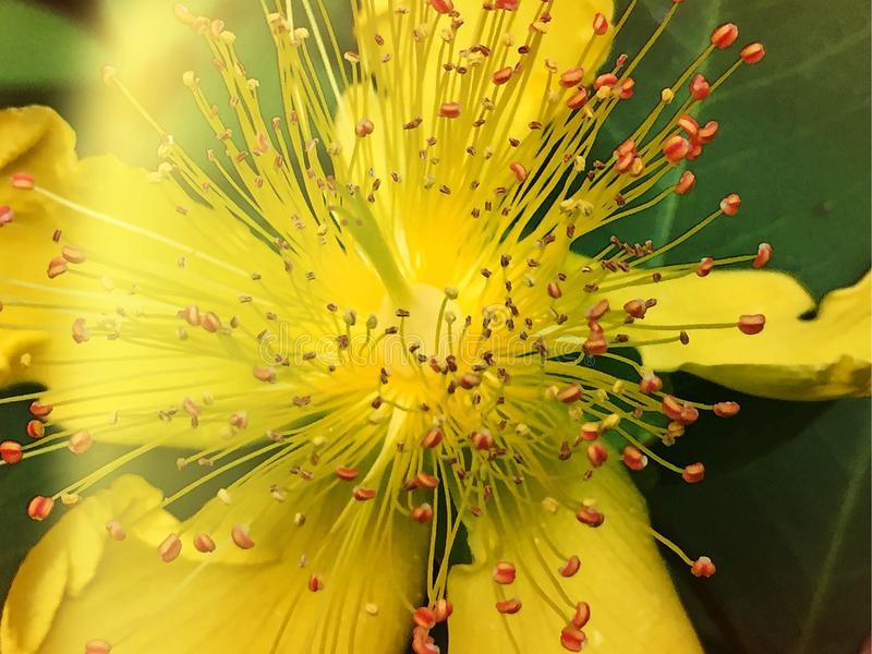 Una flor hermosa imagen de archivo libre de regalías