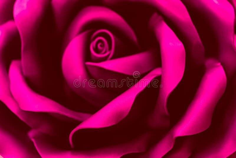 Una flor hermosa del plástico rosado Fondo enmascarado extracto Foco selectivo fotografía de archivo libre de regalías