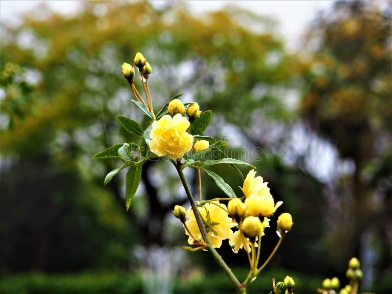 Una flor hermosa en un jard?n imagen de archivo