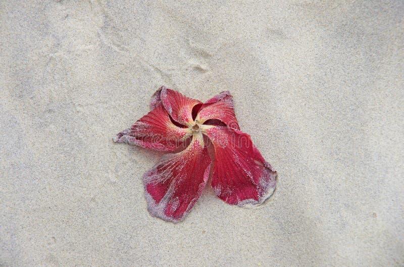 Una flor muerta en la playa fotografía de archivo libre de regalías